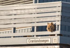 Tiere in Tromsø