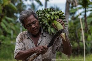 Bananenbauer auf Koh Samui