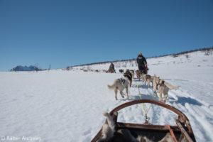 Unvergessliche Schlittenhund-Fahrten
