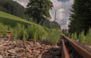 Trasse der alten Dampfbahn von Bauma nach Hinwil
